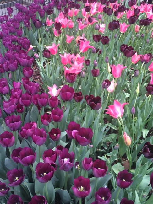 ntb-tulip-inspired-lotd-dark-skin1997 copy