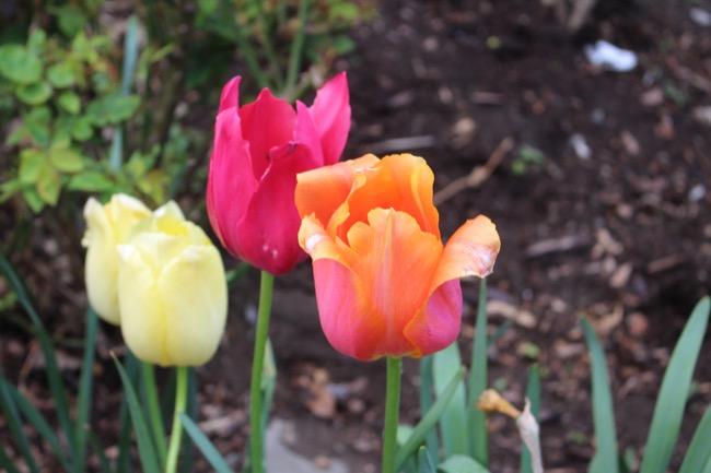 ntb-tulip-inspired-lotd-dark-skin2108 copy